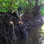 WWF Gelar Sosialisasi Pelestarian Mangrove di Aceh Tamiang